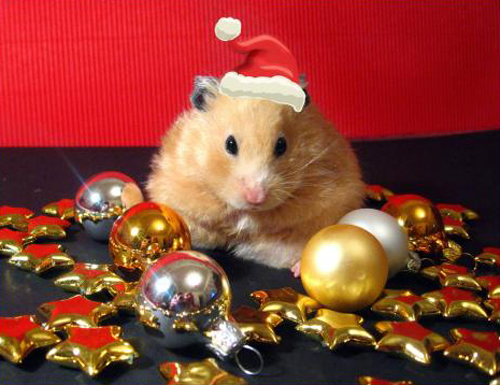 5-christmas-animals-1-1